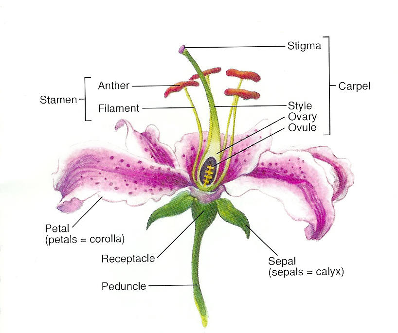 Science6shms licensed for non commercial use only botany website resources ccuart Images
